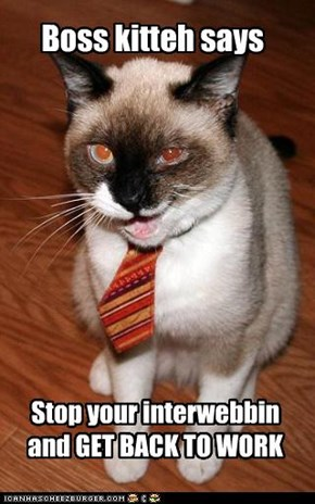 Boss kitteh says