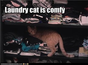 Laundry cat is comfy