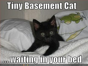 Tiny Basement Cat   ... waiting in your bed
