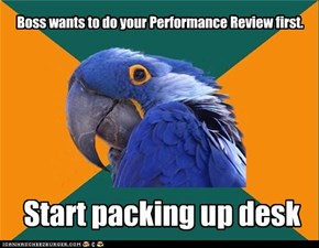 Paranoid Parrot: Performance Review