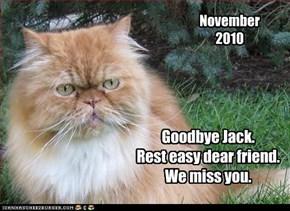 Goodbye Jack. Rest easy dear friend.  We miss you.
