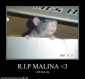 R.I.P MALINA <3