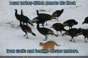 Loyal turkey-kitteh guards his flock  from wolfs and feather-duster makers.