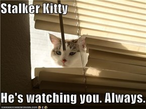 Stalker Kitty  He's watching you. Always.