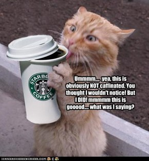 Overcaffinated cat with ADD