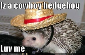 Iz a cowboy hedgehog  Luv me