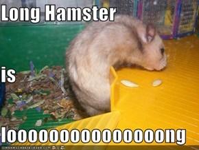 Long Hamster is looooooooooooooong