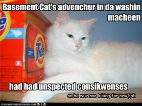Basement Cat's advenchur in da washin macheen