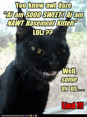 """ Ai  am  SOOO  SWEET !  Ai  am  NAWT  Basement  Kitteh"""