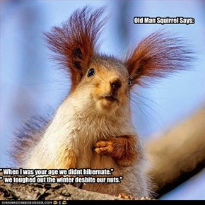 Old Man Squirrel Says: