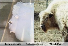 Snow on sidewalk Totally Looks Like White Buffalo