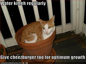 Water kitteh regularly  Give cheezburger too for optimum growth