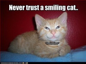 Never trust a smiling cat..