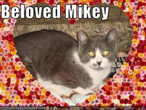 Beloved Mikey
