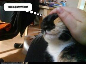 purrrrrfect