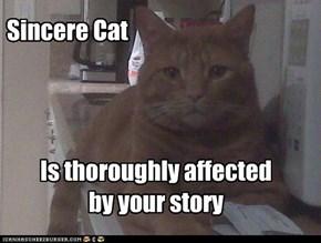 Sincere Cat