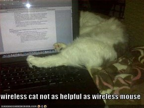 wireless cat not as helpful as wireless mouse