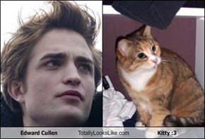 Edward Cullen Totally Looks Like Kitty :3