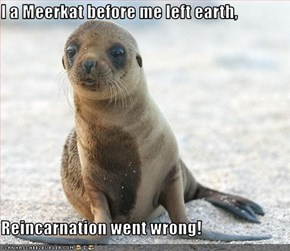 I a Meerkat before me left earth,  Reincarnation went wrong!