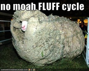 no moah FLUFF cycle