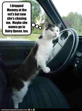 I dropped Mommy at the vet's but now she's chasing me.  Maybe she wanna go to Dairy Queen, too.