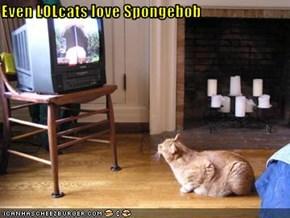 Even LOLcats love Spongebob