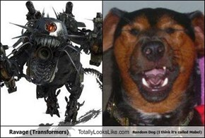 Ravage (Transformers) Totally Looks Like Random Dog (I think it's called Mabel)