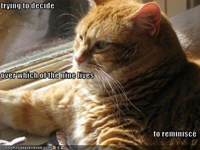 trying to decide over which of the nine lives to reminisce