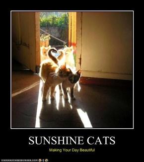 SUNSHINE CATS