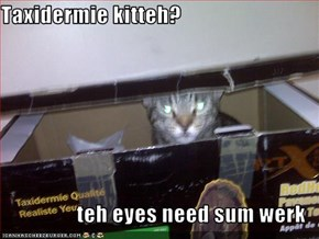 Taxidermie kitteh?  teh eyes need sum werk