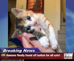 Breaking News - Humans finally found off button for all cats!
