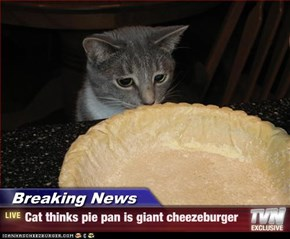 Breaking News - Cat thinks pie pan is giant cheezeburger