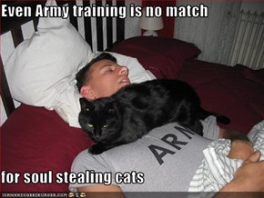 Even Army training is no match  for soul stealing cats