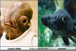 Captain Akbar Totally Looks Like Goldfish