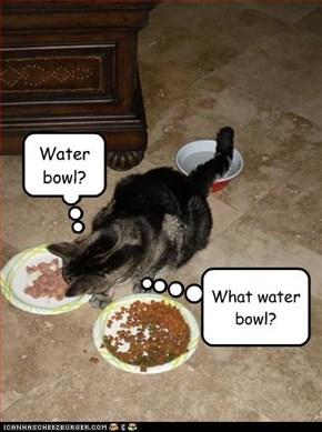 Water bowl?