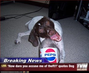 Breaking News - 'How dare you accuse me of theft!!' quotes Dog