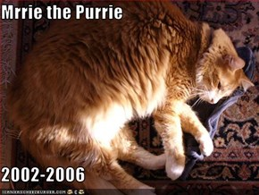 Mrrie the Purrie  2002-2006