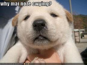 why mai noze cwying?