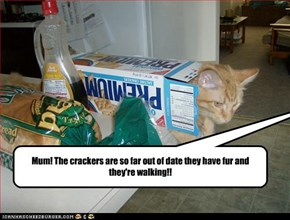 Those crackers should have been thrown out YEARS ago!