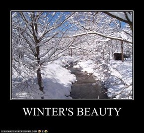 WINTER'S BEAUTY