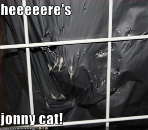 heeeeere's  jonny cat!
