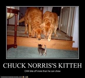 CHUCK NORRIS'S KITTEH