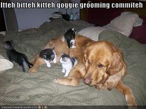 Itteh bitteh kitteh goggie grooming commiteh