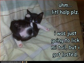 uhm...  litl halp plz.   i was just going to lick mi tail, but i got losted.