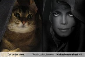 Cat under sheet Totally Looks Like Michael under sheet =D