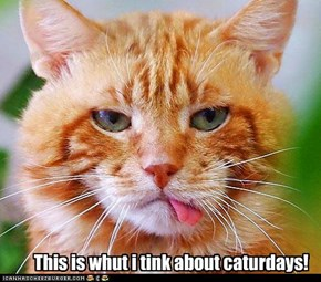 This is whut i tink about caturdays!