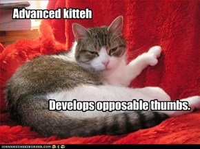 Advanced kitteh