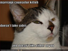 marriage counselor kitteh doesn't take sides and doesn't like either of you