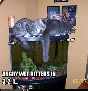 ANGRY WET KITTEHS IN 3, 2, 1...