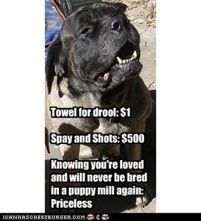 Towel for drool: $1  Spay and Shots: $500  Knowing you're loved and will never be bred in a puppy mill again: Priceless